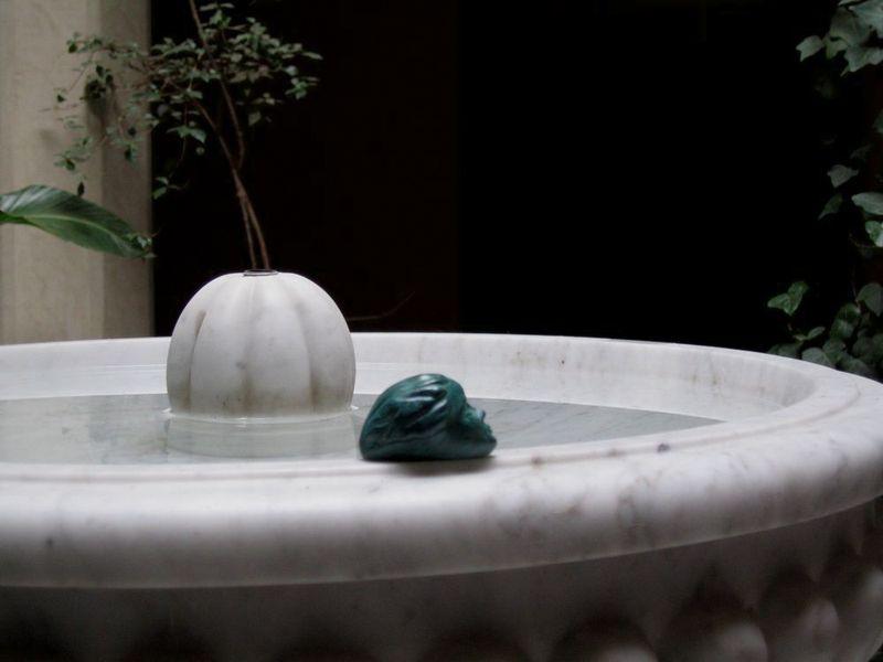 Mouette dans la fontaine